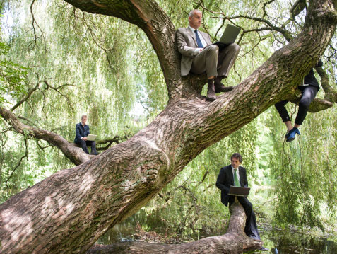 The Chase Group knows the best leaders don't simply grow on trees.